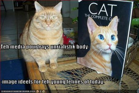 funny-pictures-cat-blames-media-for-bad-body-image
